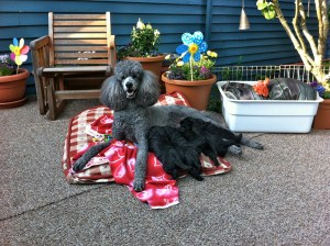 nickel and pups