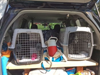 crated puppies