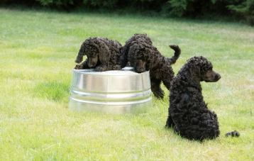 puppies and bucket