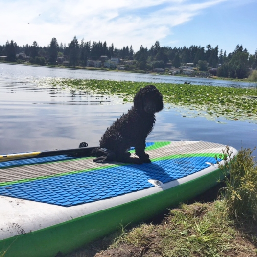 puppy paddleboard